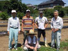 保育園児の芋掘り事業に向けてのサツマイモの苗を植えております